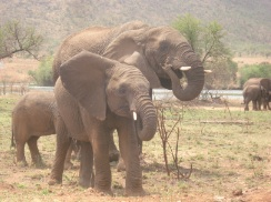 The Sales Wisdom of the Elephant